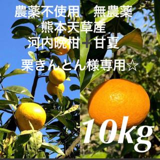 農薬不使用 無農薬 甘夏 7kg ➕河内晩柑3kg 熊本天草産(フルーツ)