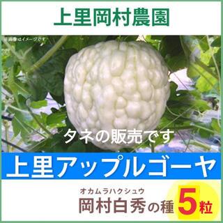 42061★HT5★上里岡村農園寅さんのアップルゴーヤ白秀のタネ5 粒(野菜)