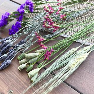 フレンチラベンダー ナガミネヒナゲシ スターチス 麦 ドライフラワー花材(ドライフラワー)
