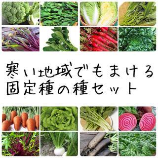 ★伝統野菜★寒い地域でもまける固定種の種セット(野菜)