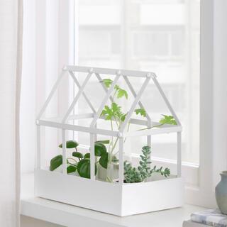 イケア(IKEA)のkiki さま専用 SENAPSKÅL セナープスコール  お家で 温室(その他)