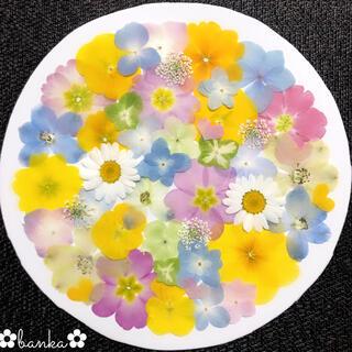 ✿押し花素材✿淡い彩りアソート【40枚】