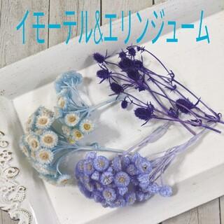 エリンジューム&イモーテル☆花材セット(ドライフラワー)
