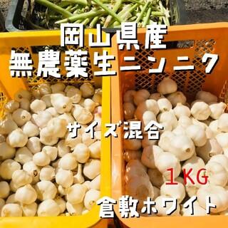 採れたて発送!無農薬生ニンニク1kg「倉敷ホワイト」岡山県産にんにく サイズ混合(野菜)