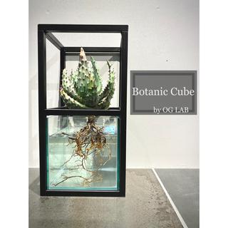 セミオーダー可 大型 水耕栽培キット 鉢 プランター アイアン ガラス サボテン(プランター)