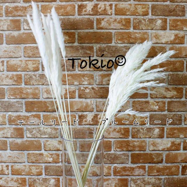 パンパスグラス テールリード 10本 しろ アイボリー ハンドメイドのフラワー/ガーデン(ドライフラワー)の商品写真