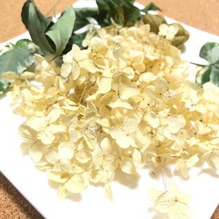 アナベルとグリーン系の花材 ナチュラル レジン アロマワックス 素材 自然 Z(ドライフラワー)