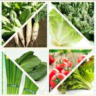 野菜の種(その他)