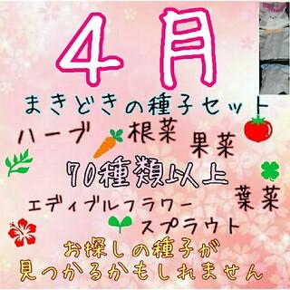 4月まきどきの固定種 野菜の種 ハーブの種 水耕栽培 家庭菜園 種 種子 園芸(野菜)