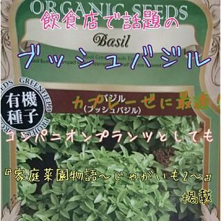 ブッシュバジル 固定種 野菜の種 ハーブの種 水耕栽培 家庭菜園 種子 種(野菜)