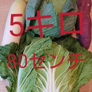 80サイズ★5キロ入り★野菜詰め合わせセット★(野菜)