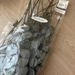 プリザーブドグリーン 1.5袋分 ユーカリ(ドライフラワー)