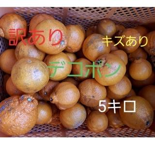香川県産 訳ありデコポン不知火 5キロ(フルーツ)