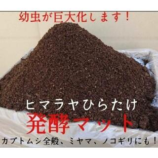 【改良版】雑虫混入99%なし!カブト幼虫が巨大化!ヒマラヤひらたけ発酵マット(虫類)