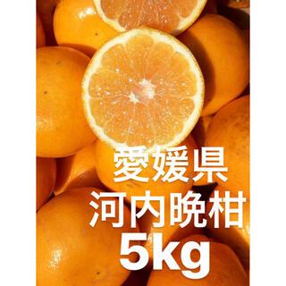 愛媛県 宇和ゴールド紅 河内晩柑 5kg(フルーツ)