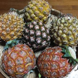 石垣島産 ピーチパイン&スナックパイン(フルーツ)