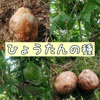 自然農・自家採取 ひょうたんの種(野菜)