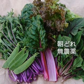 無農薬野菜 朝どれサラダセット お野菜の詰め合わせ(野菜)