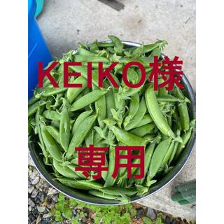 無農薬 スナップエンドウ 500g(野菜)