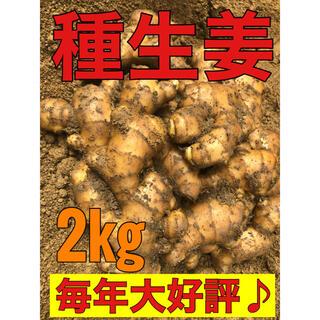 種生姜 2kg以上(野菜)