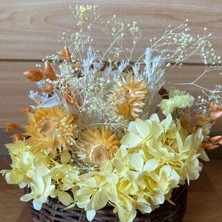 ドライフラワー花材 黄色 ミックス(ドライフラワー)