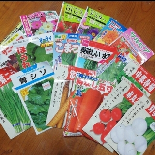 春まき野菜のタネ7種 Bセット(その他)