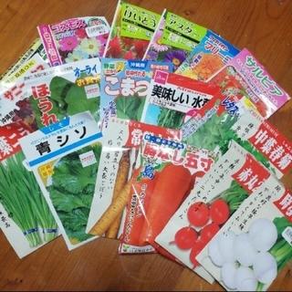 春まき野菜のタネ7種 Cセット(その他)