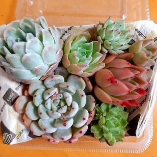 多肉植物☆詰め合わせ(その他)