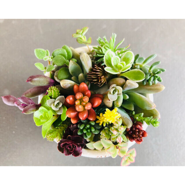多肉植物 寄せ植えセット カット苗 ハンドメイドのフラワー/ガーデン(その他)の商品写真