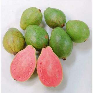 ほんのり甘くとろける!沖縄産グアバピンク無農薬かわいい小玉1.2kg(フルーツ)