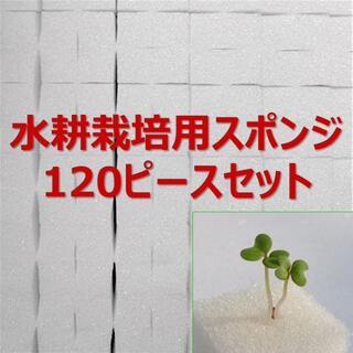 ★無農薬 水耕栽培!十字切れ目入りスポンジ(2.5×2.5cm) 120株分(野菜)