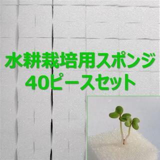 ★無農薬 水耕栽培!十字切れ目入りスポンジ(2.5×2.5cm) 40株分(野菜)