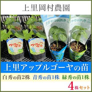 42461【白2青1緑1】送料込み!寅さんのアップルゴーヤ苗3色4株セット(野菜)