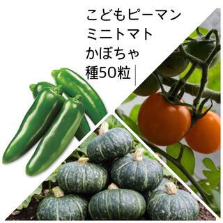 ミニトマト こどもピーマン かぼちゃ 種 (野菜)