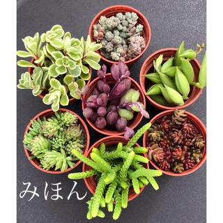 多肉植物セット(その他)