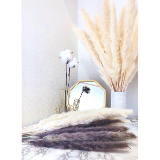 ドライフラワー インテリア パンパスグラス ホワイトブラウンミックス10本 北欧 ハンドメイドのフラワー/ガーデン(ドライフラワー)の商品写真