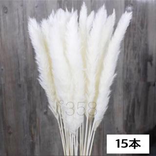 ※スプレー・乾燥済※ホワイトパンパスグラス15本ハンドメイドスワッグ花材北欧(ドライフラワー)