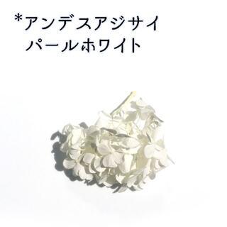 アンデスアジサイ パールホワイト 1枝(プリザーブドフラワー)