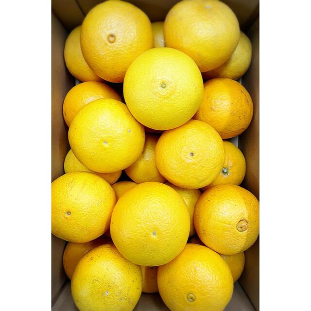 あまあまトロトロ!!本当に超オススメ!!【三崎タンゴール】2Lサイズ 5kg 食品/飲料/酒の食品(フルーツ)の商品写真