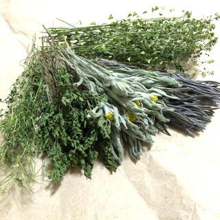 グリーン系の素材 5種類 ナチュラル 花材 自然 ドライフラワー C(ドライフラワー)