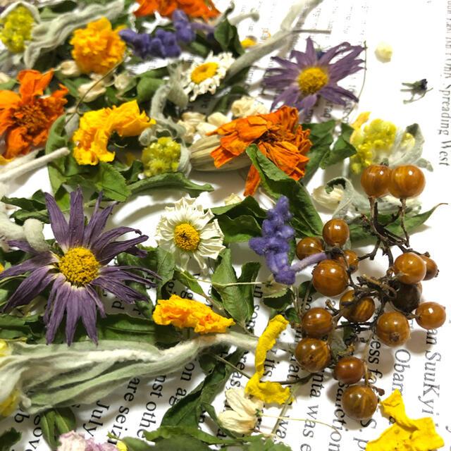 ドライフラワー 花材 ミックス ナチュラル ハーバリウム レジン 素材 F ハンドメイドのフラワー/ガーデン(ドライフラワー)の商品写真