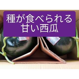 大玉西瓜ピノダディ、2Lサイズ2玉入、熊本産(フルーツ)