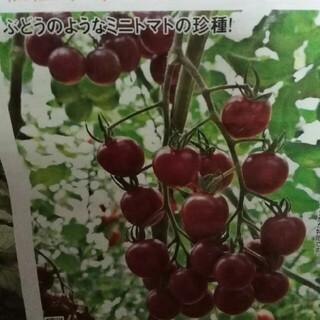 グレープトマト トスカーナバイオレット トマト 種のみ(野菜)