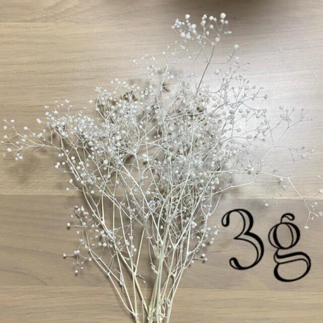 ソフトミニカスミソウ ホワイト ① ハンドメイドのフラワー/ガーデン(プリザーブドフラワー)の商品写真