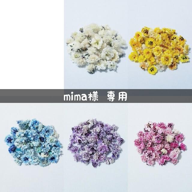 【mima様専用】かすみ草のドライフラワー ハンドメイドのフラワー/ガーデン(ドライフラワー)の商品写真
