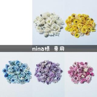 【mima様専用】かすみ草のドライフラワー(ドライフラワー)