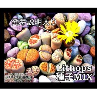 リトープス ミックス 種子 35粒+α 発芽説明入り(その他)