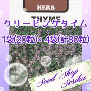 クリーピングタイム20粒 ×4袋(80粒) ハーブ 種(その他)