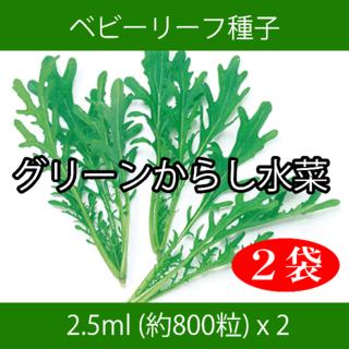 ベビーリーフ種子 B-21 グリーンからし水菜 2.5ml 約800粒 x 2袋(野菜)