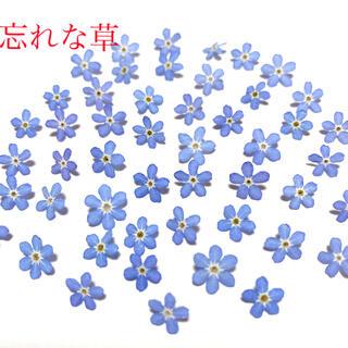 忘れな草 ドライフラワー 50輪(各種パーツ)